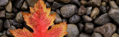cropped-autumn_maple_leaf_by_vamaena.jpg