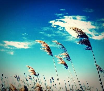 langit-biru
